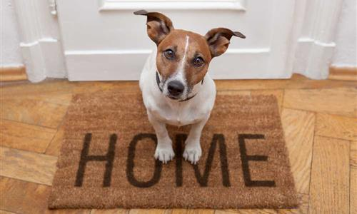 A Guide To Letting To Tenants With Pets